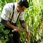Jorge cuts us a piece of sugar cane with his machete.