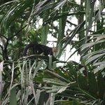 les singes