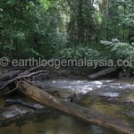 The cool clear Sungai Labua along the Bukit Labu Trail