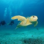 Excellent professional Diving center - active marine life