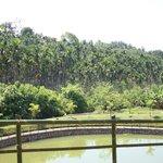 view from prabha villa