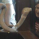Don't Blink !     Cobra