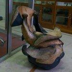 Elephant Facial Bones