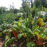 Organic vegetables and fruits gardens