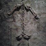 catacombe di s. Gaudioso