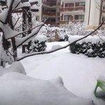 snow in Valentina Heights' garden