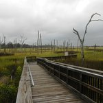 Cradle Creek Preserve