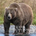 Karluk Bear