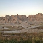 There is plenty of wildlife to see throughout Badlands National Park, SD.