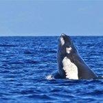 Whale surfacing near raft
