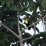 Toucans, seen from the dining room