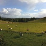 View of sheep pasture
