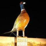World's Largest Pheasant @ Night