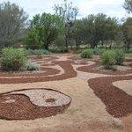 Olive Pink Botanic Garden (3)