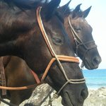 Marvin's horses