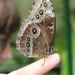 The wonder of a butterfly on your finger!