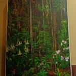 Picture of the Rainforest
