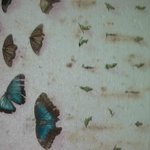 The different stages of a Butterflies life