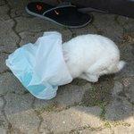 Кролик лопает арбузные корки