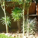 Aloe Garden
