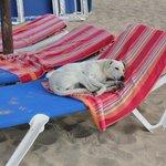 à la plage les chiens s'impose!!!