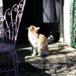 il gatto Romeo