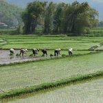 Amazing rice fields of Vietnam!