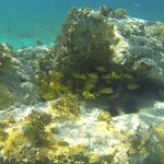 Manchioneel Bay Snorkel - just off Cooper Beach