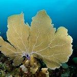 Underwater Ambergris Caye