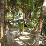 Lush hammock garden