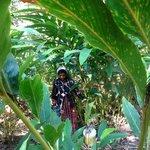 rando dans les plantations d' épices