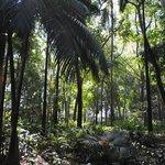 A shady spot at Trianon Park