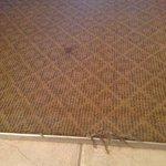 ripped carpet
