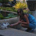 кролики местные