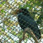Vogel in de voliëre