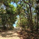 Trilha com vista da praia de Lopes Mendes