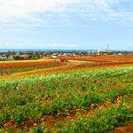The Flower Fields (nearby)