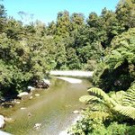 En route to Rivendell (Kaitoke Park)