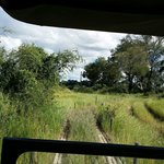 game drive from vehicle