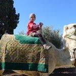 Boy on camel