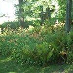 Day Lillies~back garden