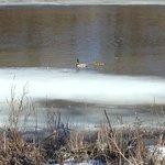 early spring and the ducks return-view from Anchorage Restaurant
