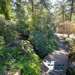 Beautiful Garden Walkway to The Japanese Teahouse