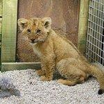 Gorgeous cub