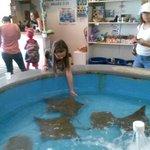 granddaughter feeding the stingrays