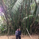 The bamboo was amazing