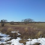 Broad Meadow in February
