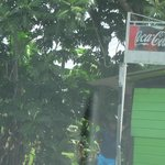 Coca Cola Sign and Green Shed