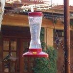 hummingbird watching in the courtyard
