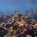 Isla Grande - Snorkeling
